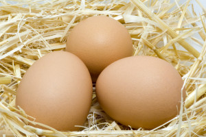 Reproducere si incubatie